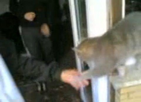 猫 帰りに握手を求める02