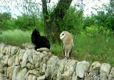 猫 フクロウと仲良し02