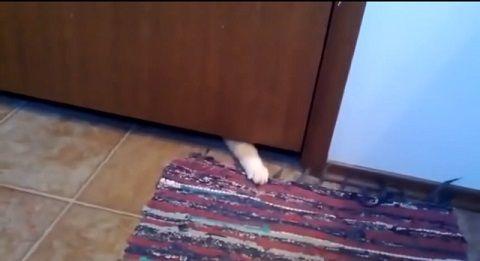猫 敷物泥棒00