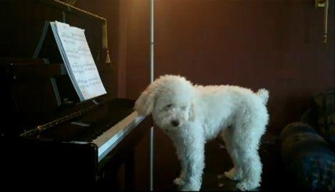 犬 piano 弾語り03