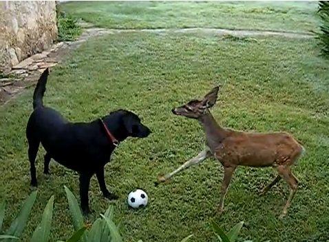 犬 鹿と遊ぶ06