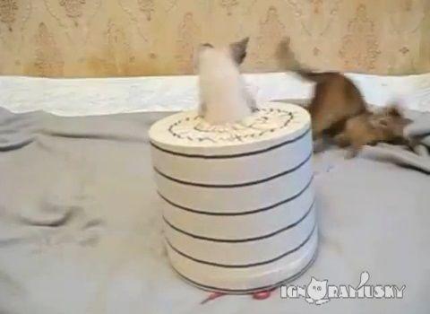 子猫 猫要塞の攻防04