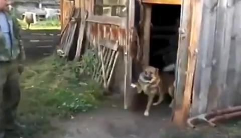 犬 小屋のドアを閉じる03