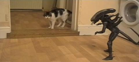 猫 vs Alien03