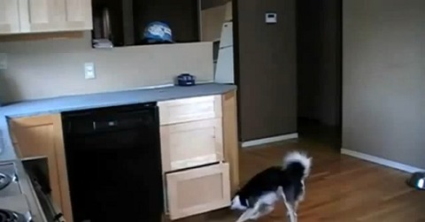 犬 キッチンの引き出しで01