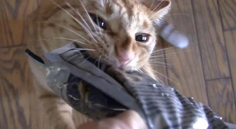 猫 袋を引っ張る02