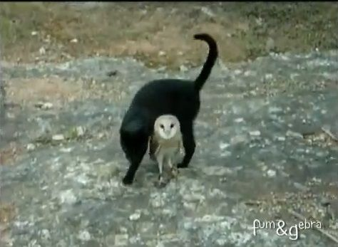 猫 フクロウと仲良し03