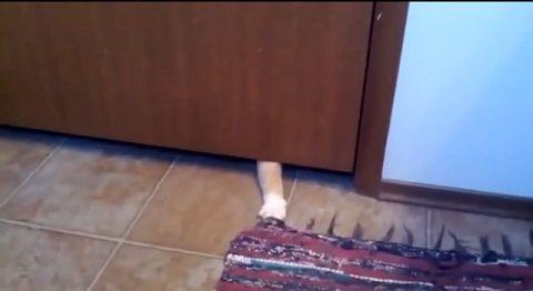 猫 敷物泥棒03