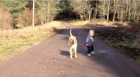 犬 子供と散歩で水溜り02