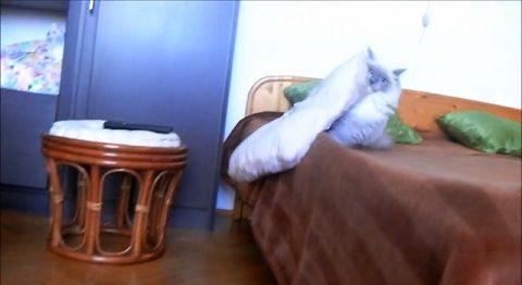 子猫 クッション大好きで持ち歩きたい06