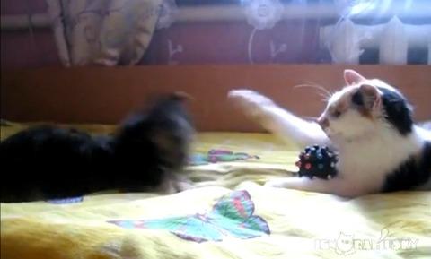 犬猫 おもちゃ返して04