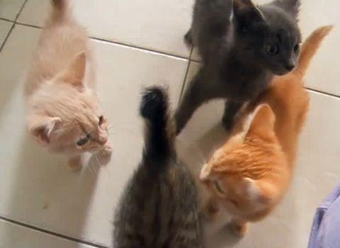 子猫 餌に群がる00