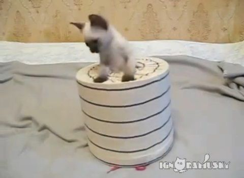 子猫 猫要塞の攻防02