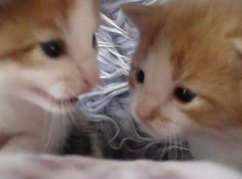 子猫 2匹で会話01
