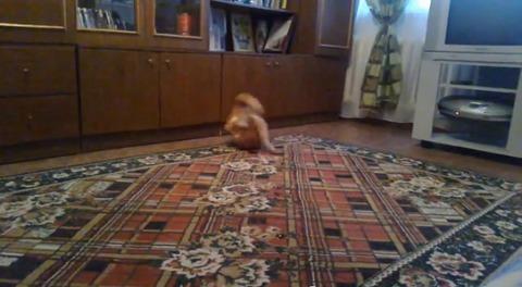 猫 ダンゴムシ05
