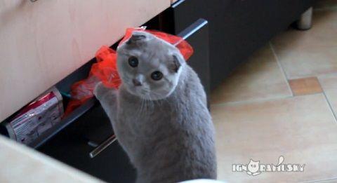 猫 見られてるのに気づいたドロボー猫05