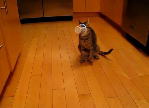 猫 ヨーグルトの空容器が顔に04