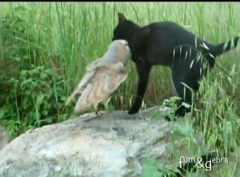猫 フクロウと仲良し04