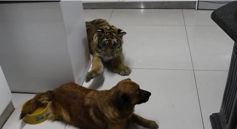 犬 遊びたい相手が無理11