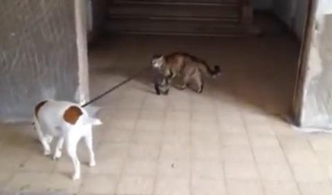 猫が犬をリードで05