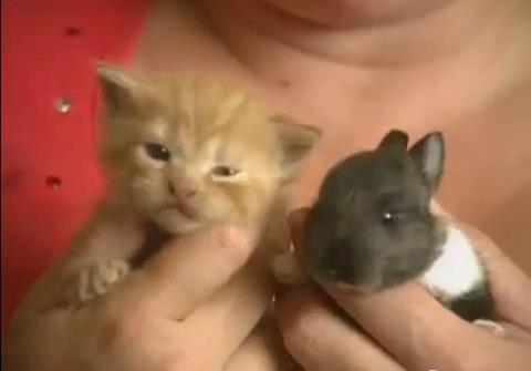 猫 ウサギを世話する07
