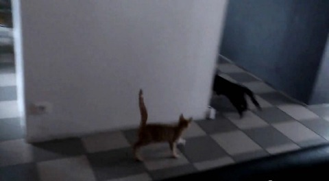 猫が猫を待ち伏せ だけど07