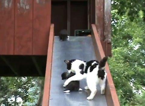 子猫 滑り台でhelp03