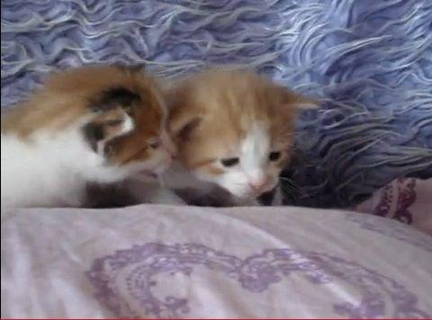 子猫 2匹で会話07