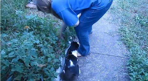 猫 花壇で背中に乗られる00