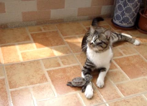 猫 小亀に好かれる01