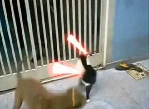犬猫 sith 09