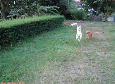 犬 飛び越える犬と越えられない犬00