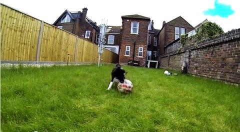 子犬 ボールにアタック・・・06
