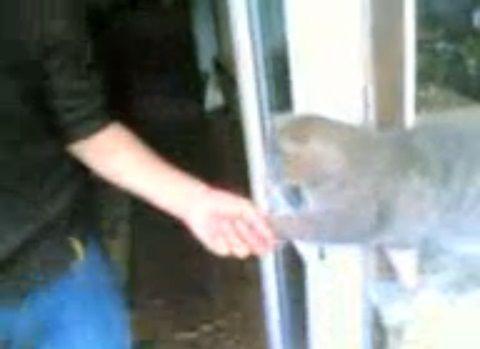 猫 帰りに握手を求める01
