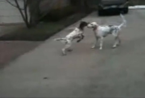 犬 なぜか倒れる02