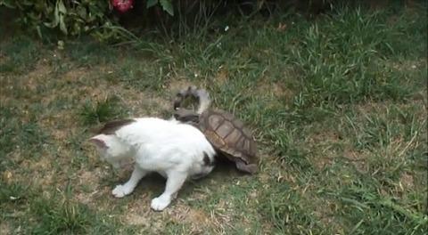 猫 亀にマッサージ04