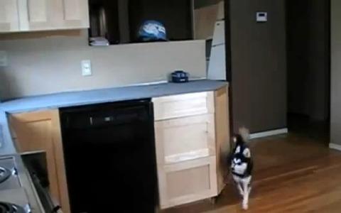 犬 キッチンの引き出しで00