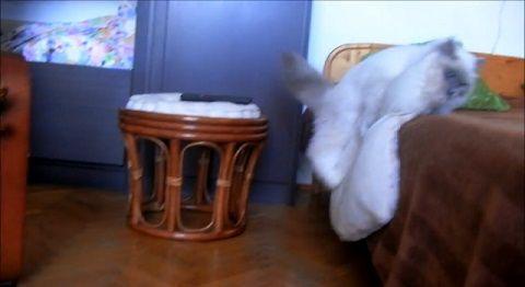 子猫 クッション大好きで持ち歩きたい04