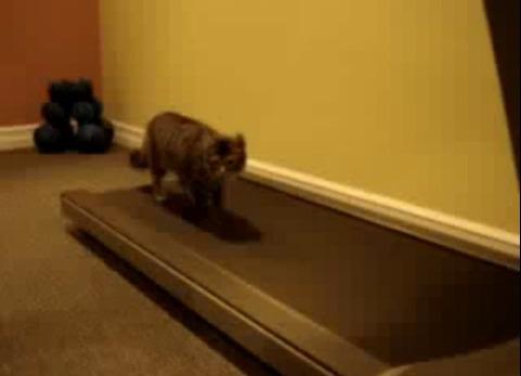 猫 ルームランナーで歩こうと00