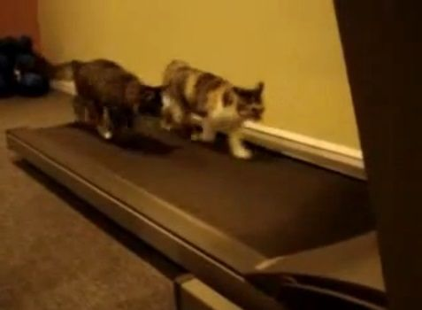猫 ルームランナーで歩こうと05