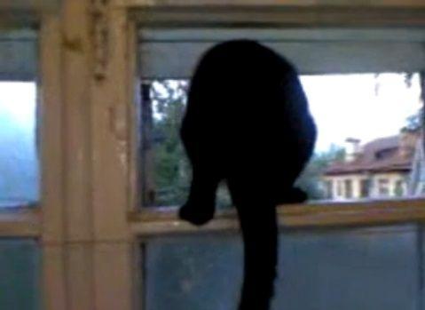 猫 犬の吠え声の真似04