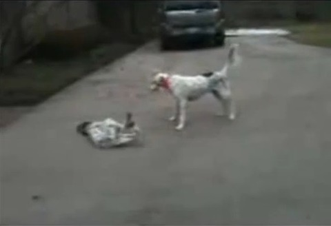 犬 なぜか倒れる06