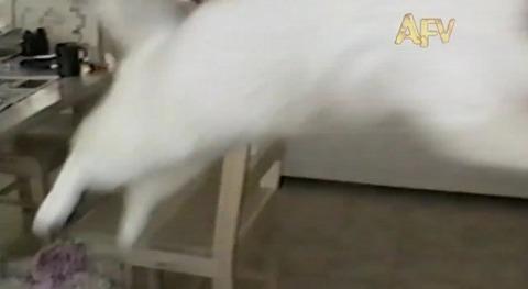 猫 ジャンプして滑って落ちる02