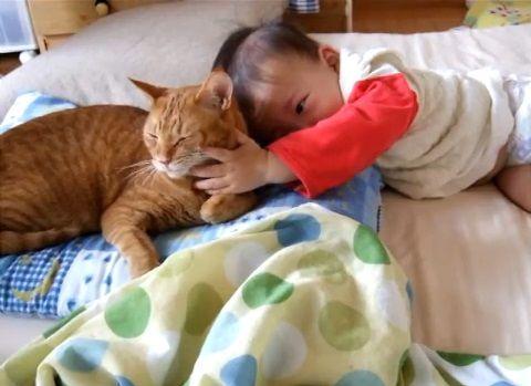 猫 赤ちゃんをペロペロ03