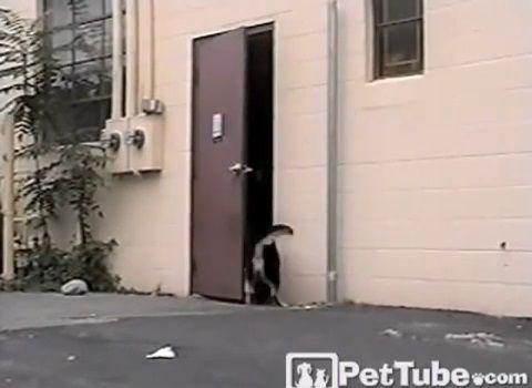 犬 犬のためにドアを開けてあげる犬04