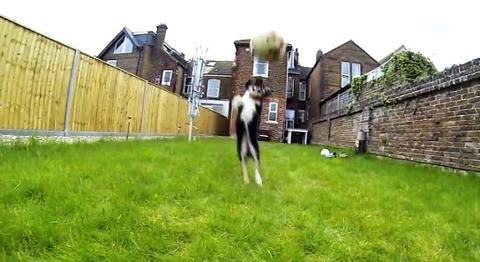 子犬 ボールにアタック・・・01