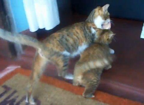 猫 肉の奪い合い漁夫の利06