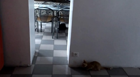 猫が猫を待ち伏せ だけど00