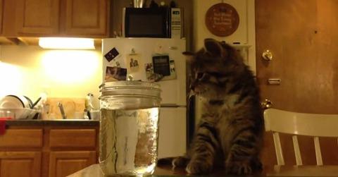 子猫 ウトウトして水に顔が06