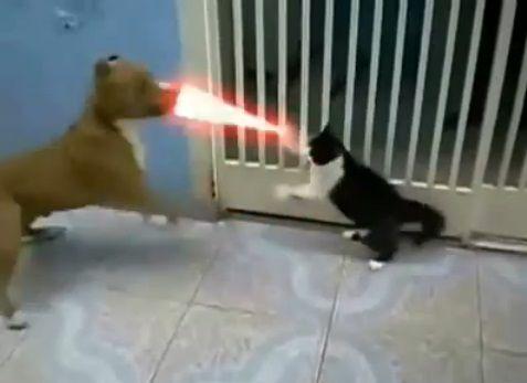 犬猫 sith 05